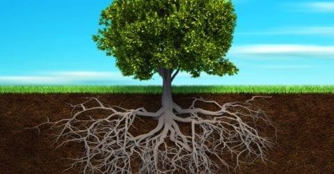 Grounding: Le radici della fiducia